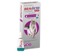Bravecto Spot on Plus Large Cat Purple 6.25kg - 12.5kg 1 Pack