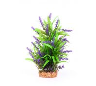 Kazoo Aquarium Plant Thin Leaf With Purple Flower