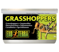 Exo Terra Wild Male Grasshoppers Small